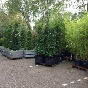 plantenverhuur breda outdoor brabant