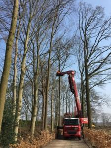 Bomen snoeien hoveniersbedrijf breda